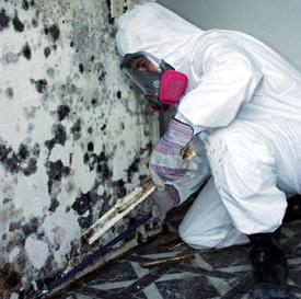 mold tech remediation fl