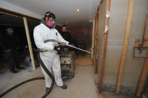 mold tech removing mold fl