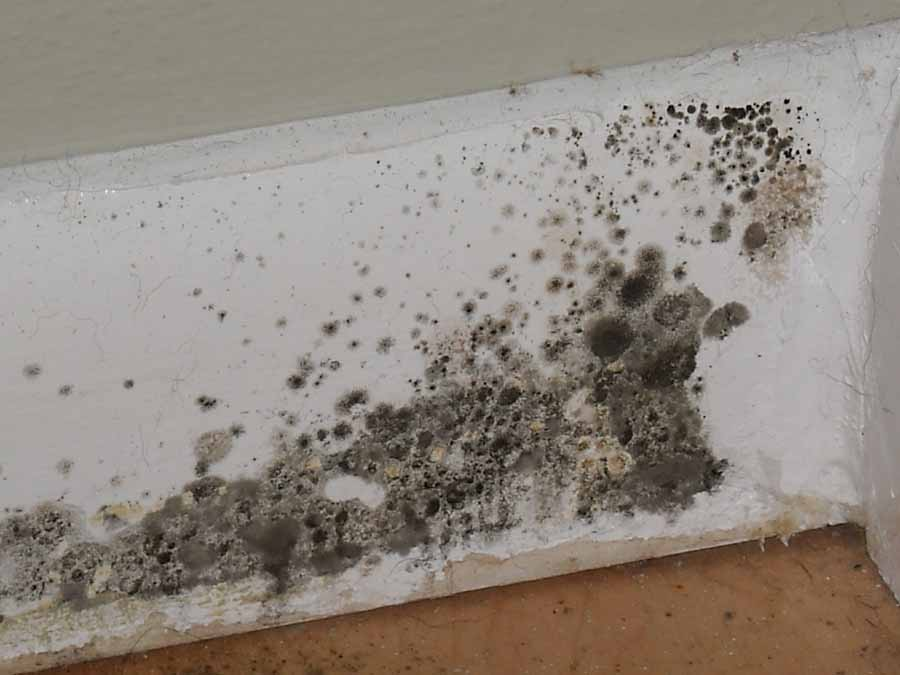Lakewood Park Fl Emergency Mold Remediation