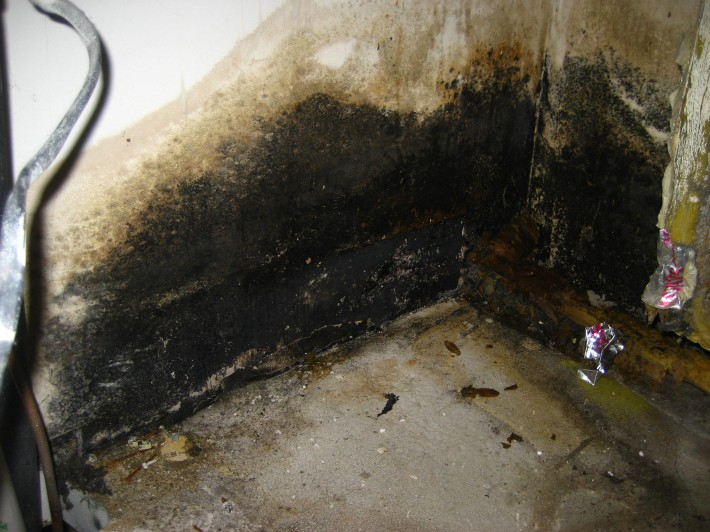 Black Mold Environmental Cleaning Remediation Melbourne Florida
